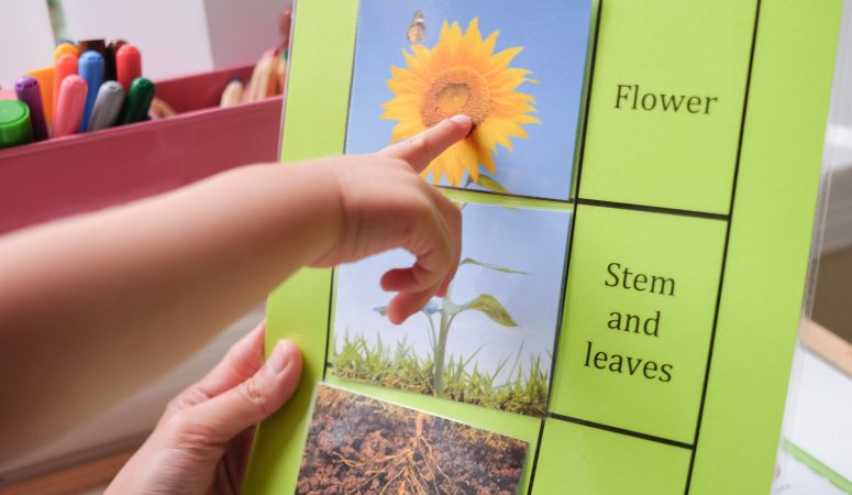 Flower part puzzle learning activity